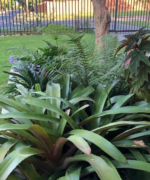 Waverly Garden